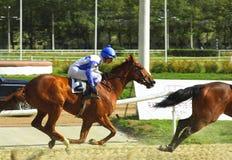 приз horserace Стоковые Изображения