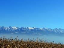 прикарпатская зима гор Стоковая Фотография RF