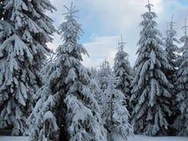 Прикарпатская зима Стоковая Фотография RF