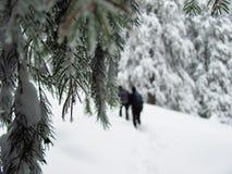 Прикарпатская зима Стоковое Изображение