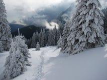 Прикарпатская зима Стоковое фото RF