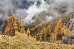 прикарпатская долина Украины горы Стоковые Изображения