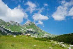 прикарпатская долина Украины горы Стоковые Изображения RF
