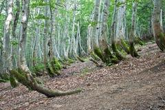 Прикарпатские горы и лес стоковая фотография rf