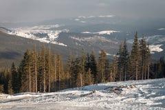 Прикарпатские горы под снегом в зиме Стоковые Фото