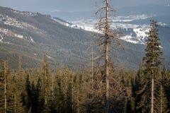 Прикарпатские горы под снегом в зиме Стоковое фото RF