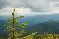 прикарпатский взгляд сверху гор Стоковая Фотография RF