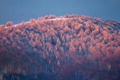 прикарпатский восход солнца гор Стоковые Фотографии RF