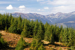 прикарпатский горный вид Стоковое Фото
