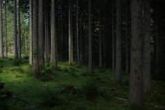 Прикарпатский лес Стоковое Изображение