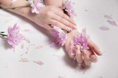 прикладывать политуру кожи внимательности прозрачную Стильное фото Manicure обнажённого Красивые женские руки держа розовые цветк стоковая фотография rf