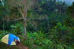 Приключение семьи пешее в тропическом тропическом лесе стоковое изображение rf