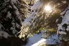 Приключения зимы Лес Карпат Snowy Украина стоковые фото