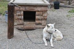 прикованный скелетон столба собаки к стоковые фотографии rf