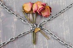 3 прикованных розы Стоковое Фото