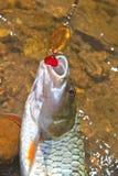 Прикорм рыбной ловли крюка колючки Hampala металлический Стоковое Изображение RF