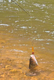 Прикорм рыбной ловли крюка колючки Hampala металлический Стоковое Фото
