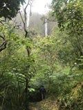 Приключение джунглей Стоковые Изображения RF