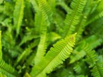 Приключение маленького паука на лист папоротника Стоковые Изображения