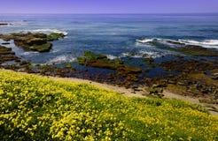 прилив бассеина la jolla пляжа Стоковое Изображение RF