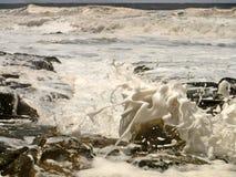 Прилив весны стоковая фотография