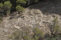 прилив весны Стоковые Изображения RF