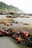 прилив жизни низкий морской стоковое изображение rf