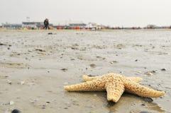 прилив starfish пляжа низкий Стоковая Фотография