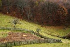 Приложение для животноводческих ферм во дне осени стоковая фотография