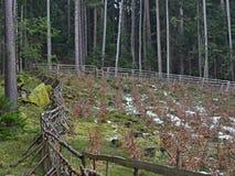 Приложение защищает новые деревья, лесовозвращение, южную Богемию, Стоковое Изображение