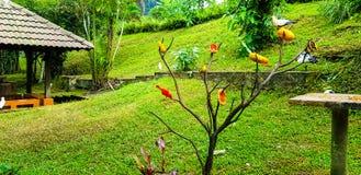 Приманка еды птицы на дереве на парке птицы KL Стоковое фото RF