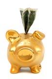 примечания доллара банка золотистые piggy Стоковая Фотография