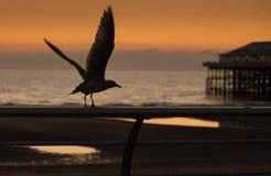 Принимать полет Стоковое Фото