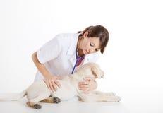 принимать собаки внимательности veterinay Стоковые Изображения RF
