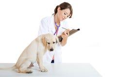 принимать собаки внимательности veterinay стоковое фото