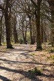 Принимать собаку для прогулки через древесины стоковое фото