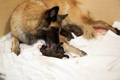 принимать щенка собаки внимательности newborn Стоковая Фотография