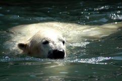 принимать swim стоковое фото