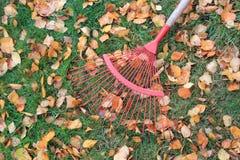 Принимающ остатки от сгребать листья Стоковые Фото