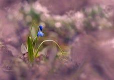 Приносить более близкую весну Стоковое Изображение