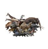 Принципиальная схема животных Стоковое Фото