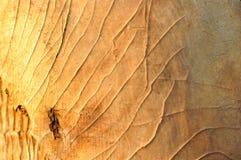 Предпосылка текстуры дерева расшивы Стоковая Фотография RF