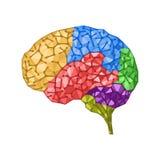 Принципиальная схема людского мозга Стоковое Изображение RF