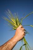 Принципиальная схема Wheat.Harvest Стоковое фото RF