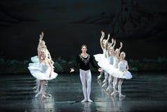 Принц в поисках белого лебедя его озера лебед влюбленност-балета Стоковые Фото