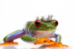 принц лягушки Стоковые Изображения