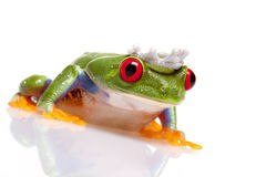 принц лягушки Стоковые Фото