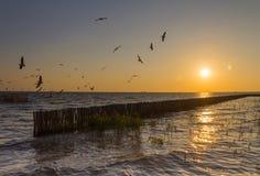 принятая солнечность чайок Квинсленда mooloolaba летания свободного полета Австралии стоковые изображения