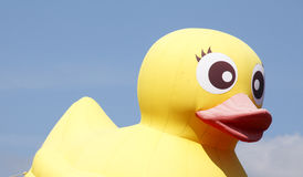 принятая студия изображения утки пластичная была желта Стоковые Изображения RF