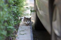 принятая улица фото кота бездомная Стоковое Изображение
